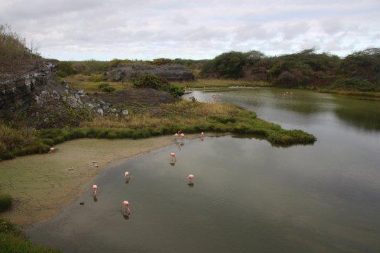 Puerto Villamil, Ekuador: lagune