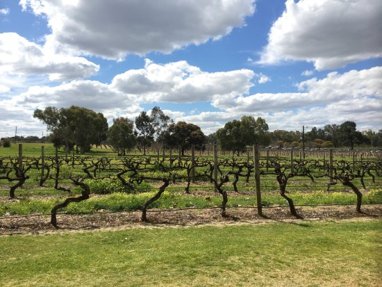 Swan Valley, Australia: photo3.jpg