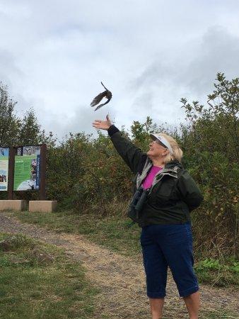 Hawk Ridge Bird Observatory: photo3.jpg