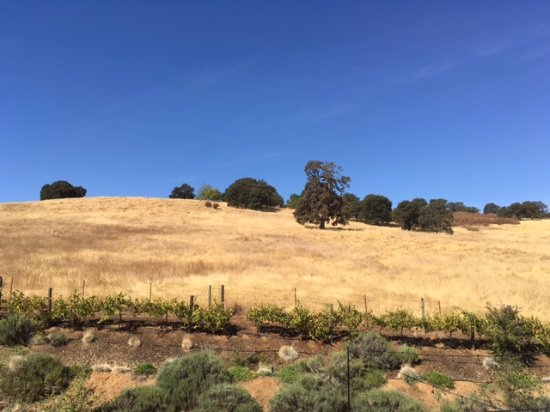 Pilot Hill, CA: View from the Grasslands patio