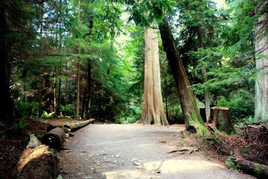 West Vancouver, Canadá: along Beacon trail