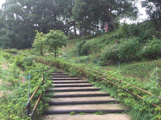 Shimonoseki City Kawatana no Kusu no Mori
