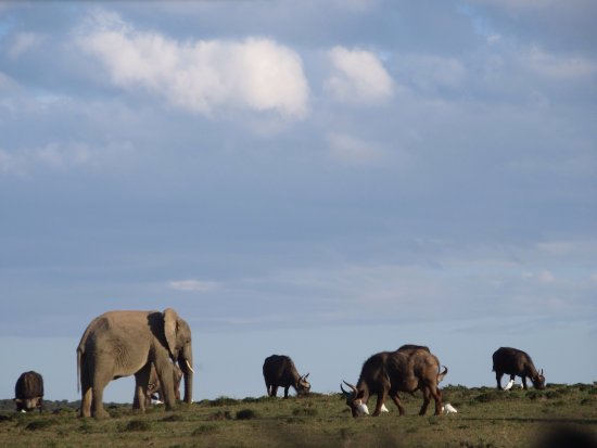 Addo Elephant National Park, Sudáfrica: photo4.jpg