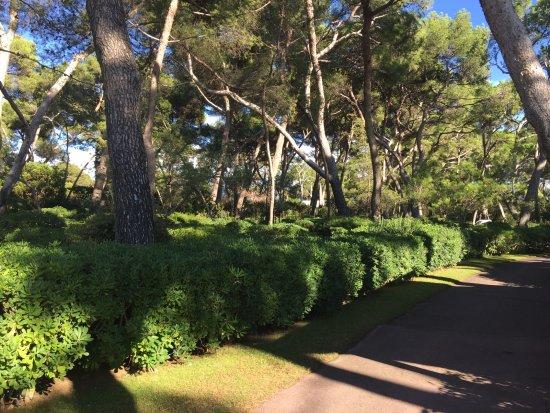 Hotel du Cap Eden-Roc: Jardín