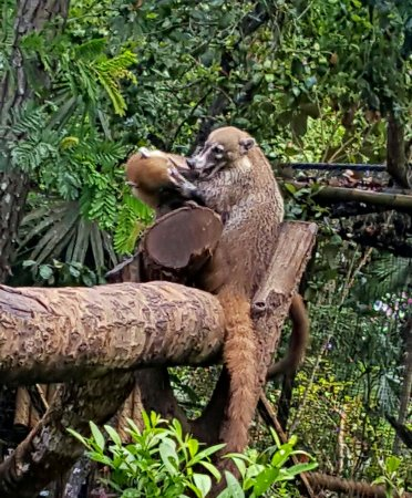 The Belize Zoo: Nat Geo eat your heart out