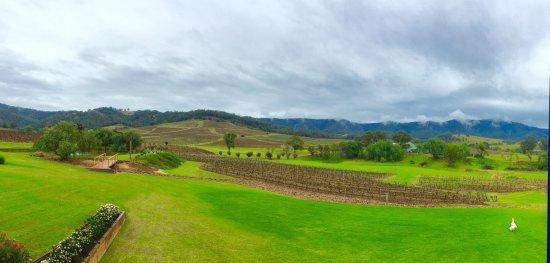 Ivanhoe Wines: photo1.jpg