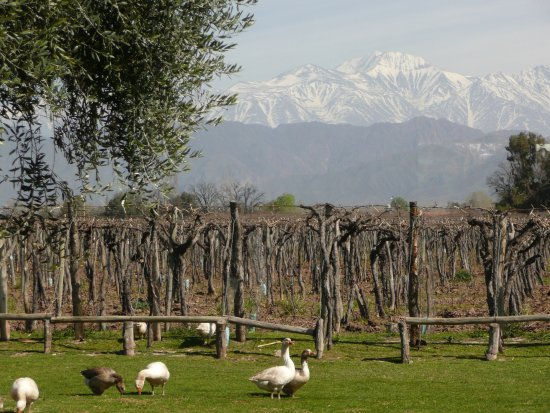 Kaiken Winery: View from the Kaiken tasting room