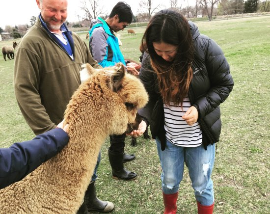 Fairlie, Nueva Zelanda: We love the cute alpacas,we had so much fun there,Jill is so nice and the tour guide called Pete