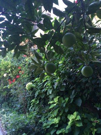 Caretta Apart Hotel: Çok bakımlı bir bahçe