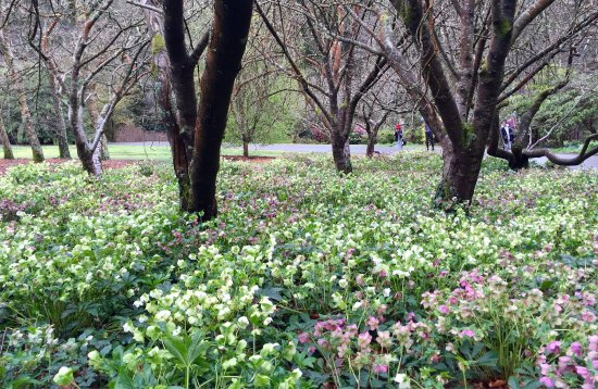 National Rhododendron Gardens: photo2.jpg