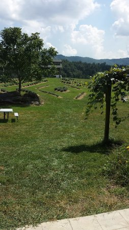 Blacksburg, VA: View from the back of the winery.