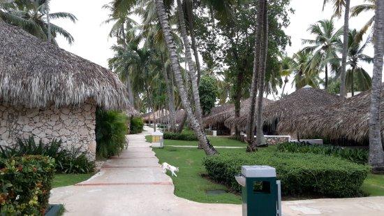 Viva Wyndham Dominicus Beach Bungalows Et Jardins
