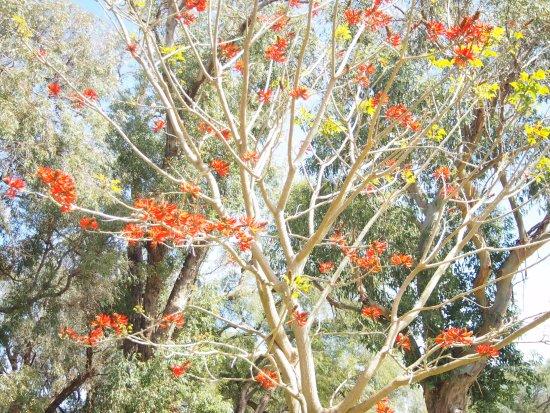 Yanchep, Australie : The flora of Australia outback