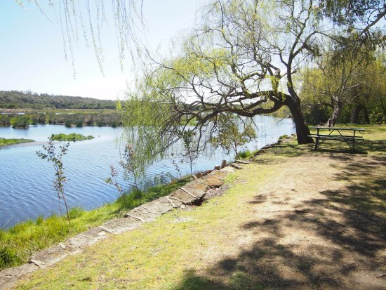 Yanchep, Australie : The ducks there will come to you if you have food