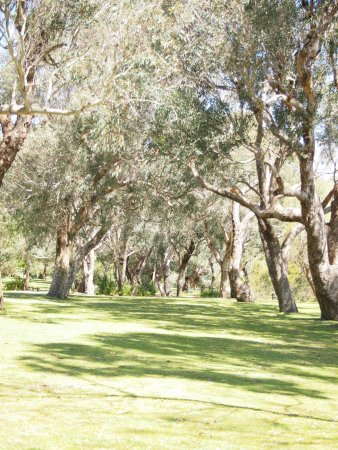 Yanchep, Australia: Walk along their recommended trails