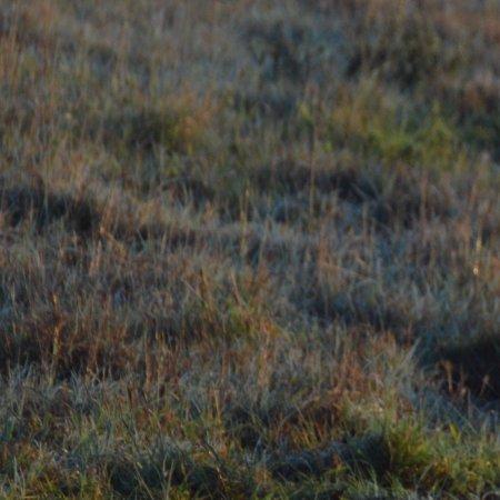 HillsNek Safaris, Amakhala Game Reserve: Majestic lions