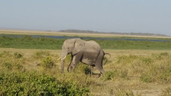 Amboseli National Park Photo