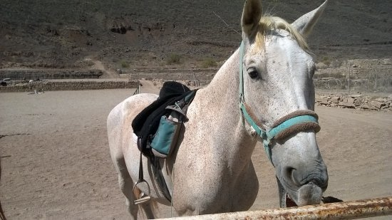 Horse Riding Adventures in Tenerife : Castor. Pure Andalusian