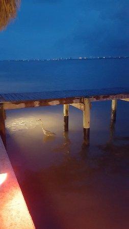 Jensen Beach, FL: 20160605_203550_large.jpg