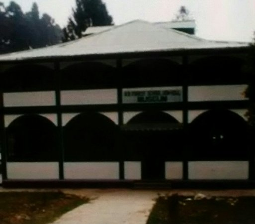 Forest Museum