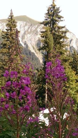 Lenk-Simmental, Suiza: Magnifique nature !!