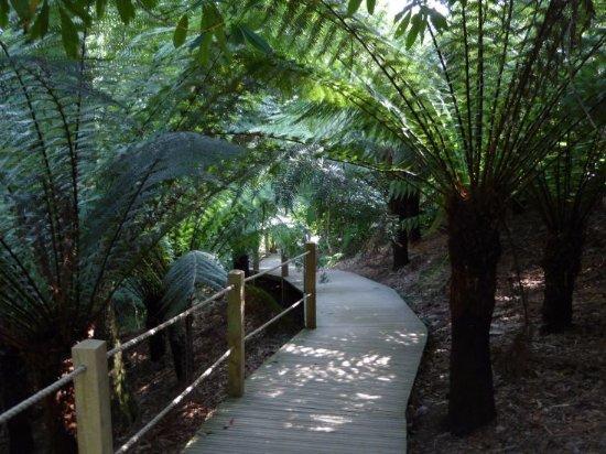 St Austell, UK: Im Jungle Garden zwischen Riesenfarnen