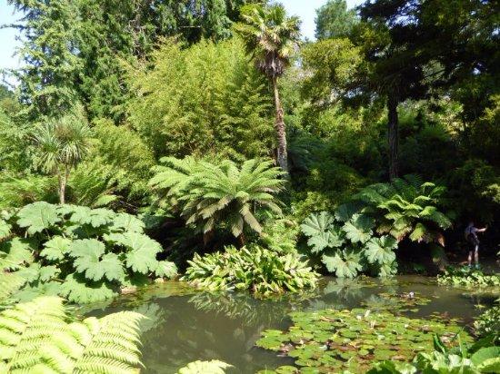 St Austell, UK: Am Teich im Jungle Garden