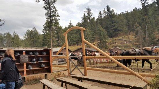 Roosevelt Lodge Cabins Photo
