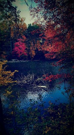 Chester, نيو جيرسي: FB_IMG_1474205152648_large.jpg