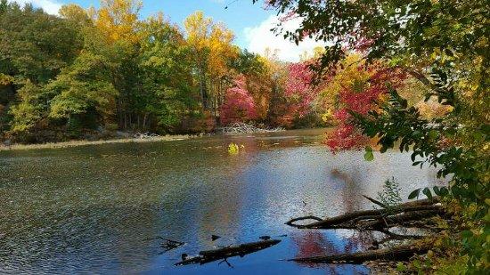 Chester, NJ: FB_IMG_1474205141877_large.jpg