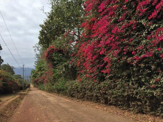 Kigongoni Lodge: photo4.jpg