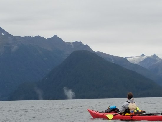 Sitka Sound Ocean Adventures: Mitch in front of us with two whale spouts just beyond him