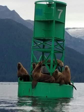 Sitka Sound Ocean Adventures: Watching the sea lions watching us!