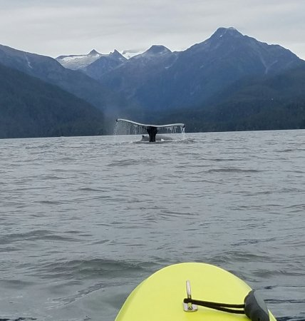 Sitka Sound Ocean Adventures: A whale diving right in front of our sea kayak!