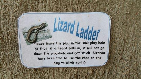 Louis Trichardt, Sudáfrica: Funny lizard friendly request