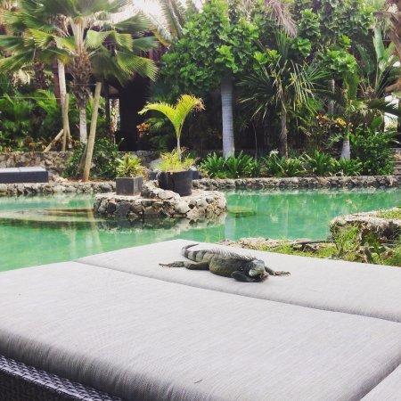 Van der Valk Kontiki Beach Resort: Lizard