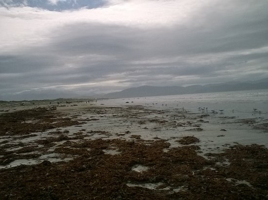 Inch, Ιρλανδία: φύκια