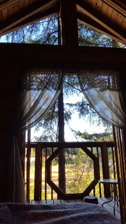Vertical Horizons Treehouse Paradise: 20160918_081424_large.jpg