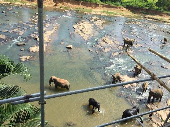 Hotel Elephant Park Photo