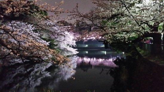 Chidorigafuchi: 20160402_215134_large.jpg