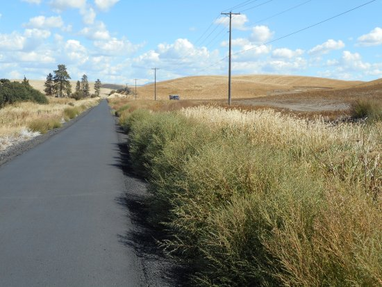 Pullman, WA: Much of the trail is open with views of farmed fields.