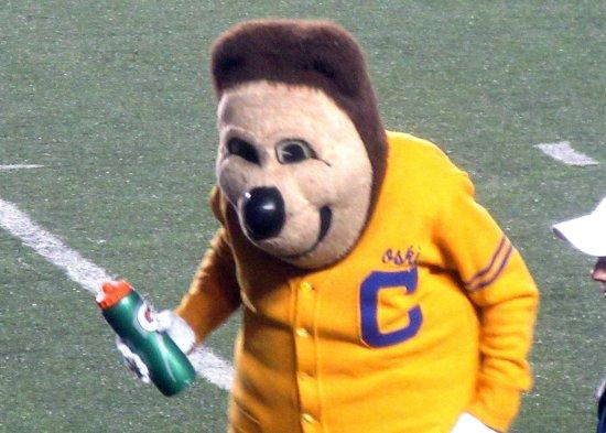 oski bear cal mascot memorial stadium berkeley ca picture of
