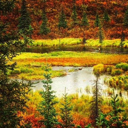 Denali Visitor Center: Denali National Park
