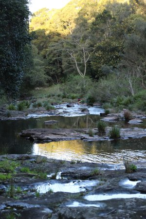 Maleny, Australia: Gardners Falls