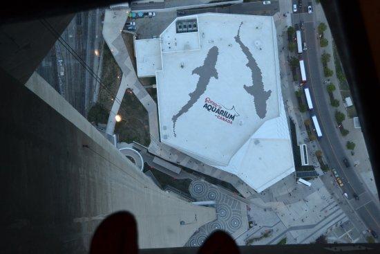 Vue picture of cn tower toronto tripadvisor - Tour de verre marseille ...
