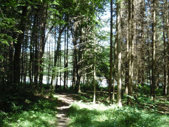 Szentgotthard, ฮังการี: A hársas tó erdős oldala nyár elején. Ideális célpont a természet szerelmeseinek és túrázóknak