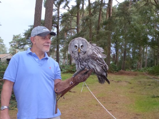 Landford, UK: Owl stare !