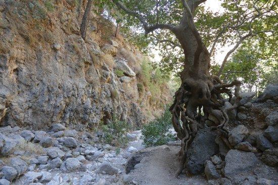Sougia, Grecia: Trasa wzdłuż strumienia