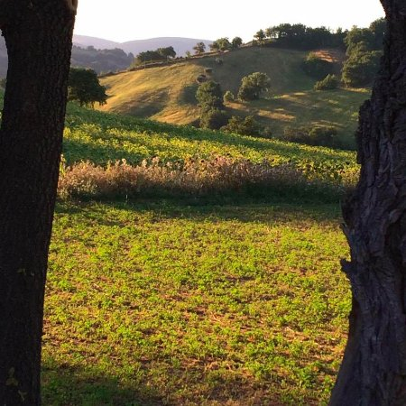 Cessapalombo, Italia: panorama dall'agriturismo