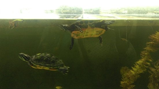 Cold Spring Harbor, NY: More turtles